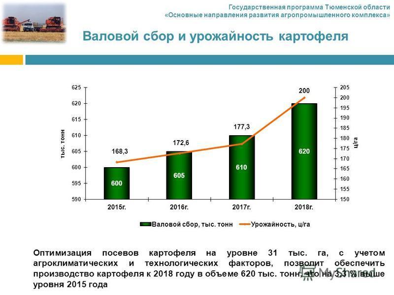 Валовой сбор и урожайность картофеля Оптимизация посевов картофеля на уровне 31 тыс. га, с учетом агроклиматических и технологических факторов, позволит обеспечить производство картофеля к 2018 году в объеме 620 тыс. тонн, что на 3,3 % выше уровня 20