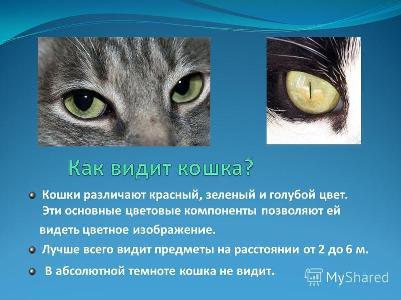 Кошки различают красный, зеленый и голубой цвет. Эти основные цветовые компоненты позволяют ей видеть цветное изображение. Лучше всего видит предметы на расстоянии от 2 до 6 м. В абсолютной темноте кошка не видит.