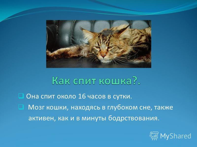 Она спит около 16 часов в сутки. Мозг кошки, находясь в глубоком сне, также активен, как и в минуты бодрствования.