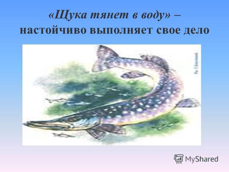 «Щука тянет в воду» – настойчиво выполняет свое дело