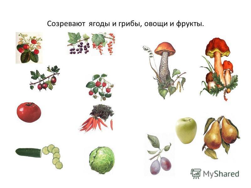 Созревают ягоды и грибы, овощи и фрукты.