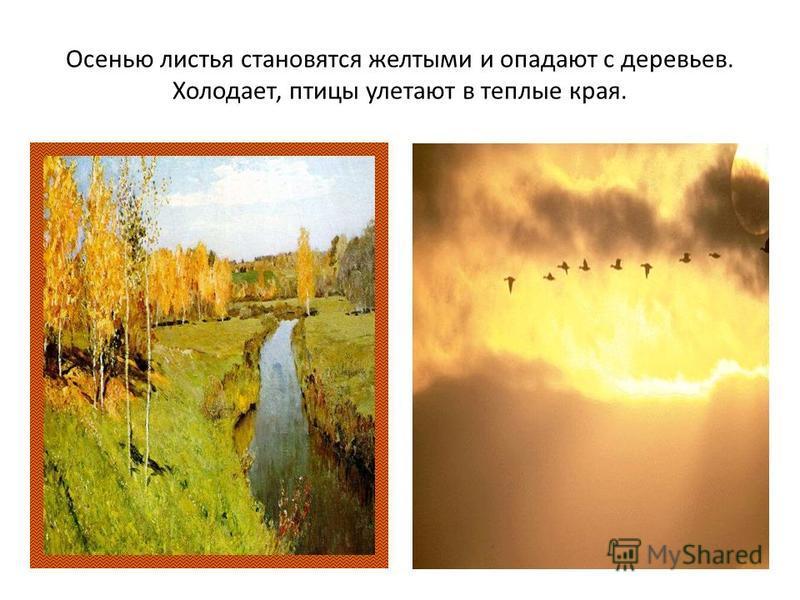 Осенью листья становятся желтыми и опадают с деревьев. Холодает, птицы улетают в теплые края.