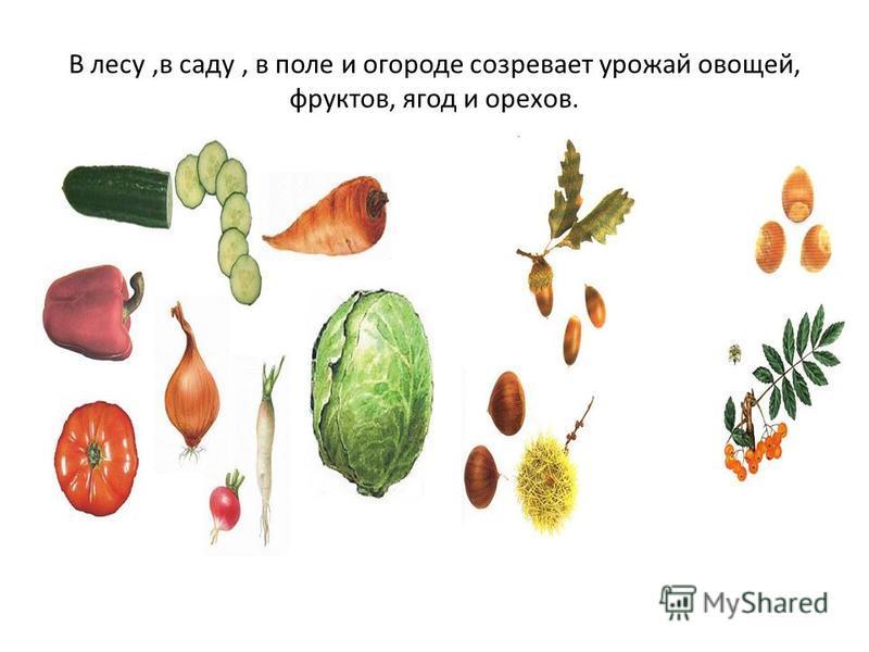 В лесу,в саду, в поле и огороде созревает урожай овощей, фруктов, ягод и орехов.
