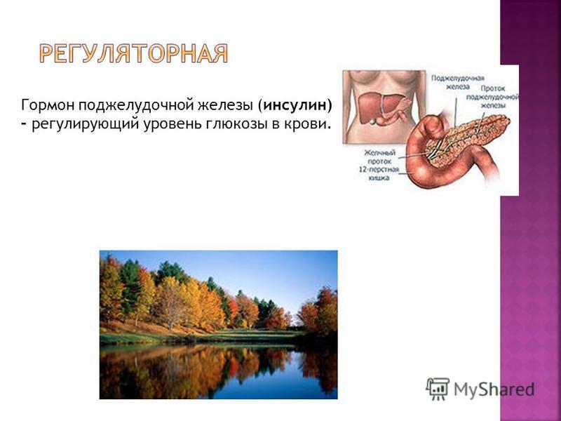 Гормон поджелудочной железы (инсулин) – регулирующий уровень глюкозы в крови.