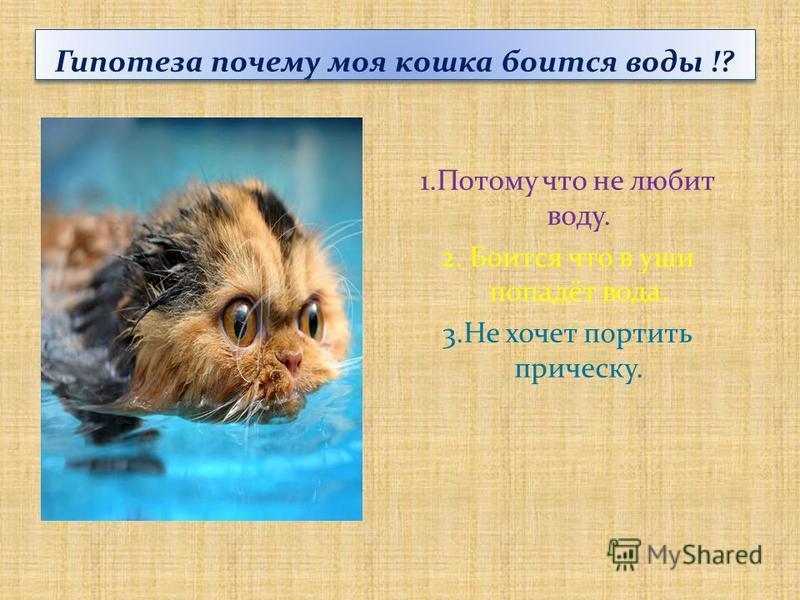Гипотеза почему моя кошка боится воды !? 1. Потому что не любит воду. 2. Боится что в уши попадёт вода. 3. Не хочет портить прическу.