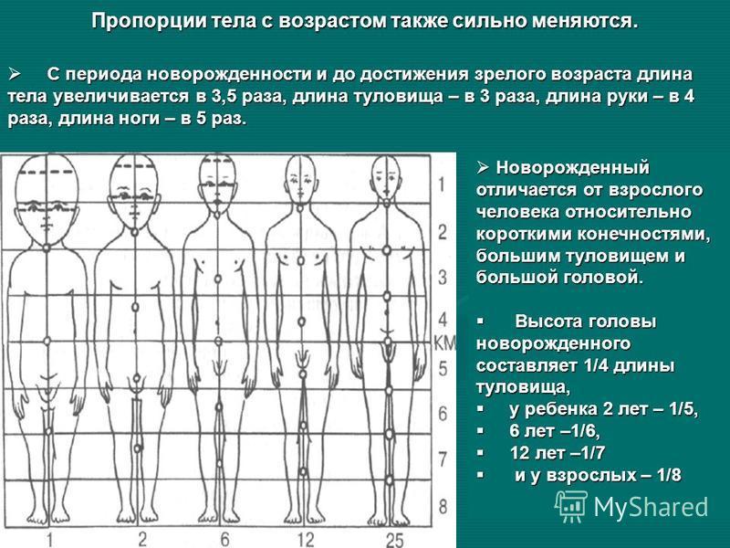 Пропорции тела с возрастом также сильно меняются. С периода новорожденности и до достижения зрелого возраста длина тела увеличивается в 3,5 раза, длина туловища – в 3 раза, длина руки – в 4 раза, длина ноги – в 5 раз. С периода новорожденности и до д
