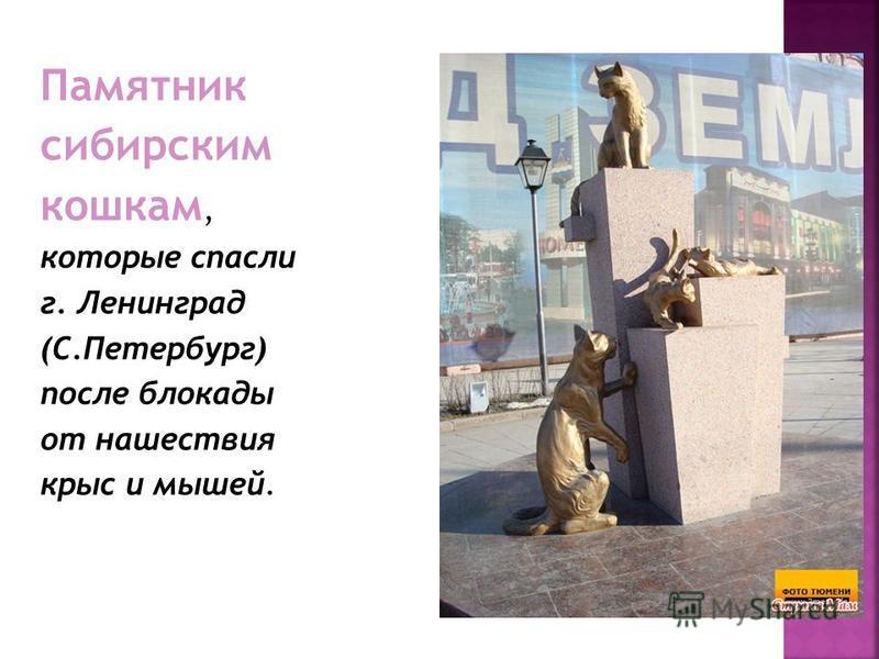 Памятник сибирским кошкам, которые спасли г. Ленинград (С.Петербург) после блокады от нашествия крыс и мышей.