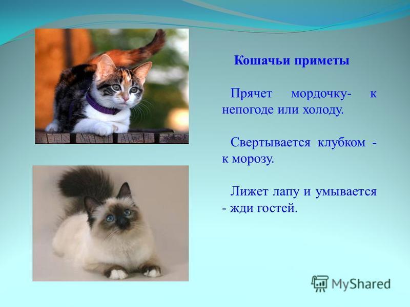 Кошачьи приметы Прячет мордочку- к непогоде или холоду. Свертывается клубком - к морозу. Лижет лапу и умывается - жди гостей.