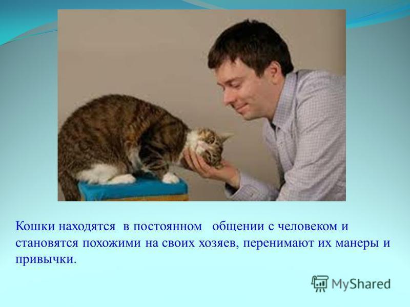 Кошки находятся в постоянном общении с человеком и становятся похожими на своих хозяев, перенимают их манеры и привычки.