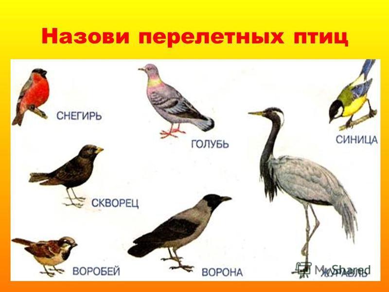 Назови перелетных птиц