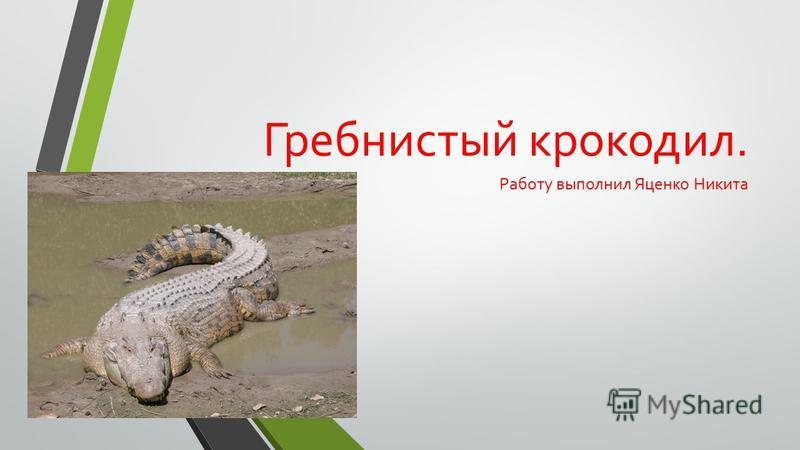 Гребнистый крокодил. Работу выполнил Яценко Никита