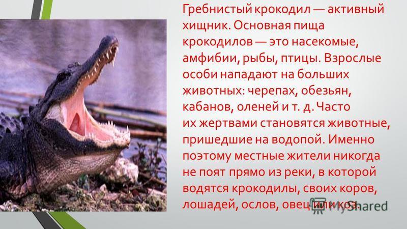 Гребнистый крокодил активный хищник. Основная пища крокодилов это насекомые, амфибии, рыбы, птицы. Взрослые особи нападают на больших животных: черепах, обезьян, кабанов, оленей и т. д. Часто их жертвами становятся животные, пришедшие на водопой. Име