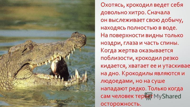 Охотясь, крокодил ведет себя довольно хитро. Сначала он выслеживает свою добычу, находясь полностью в воде. На поверхности видны только ноздри, глаза и часть спины. Когда жертва оказывается поблизости, крокодил резко кидается, хватает ее и утаскивает