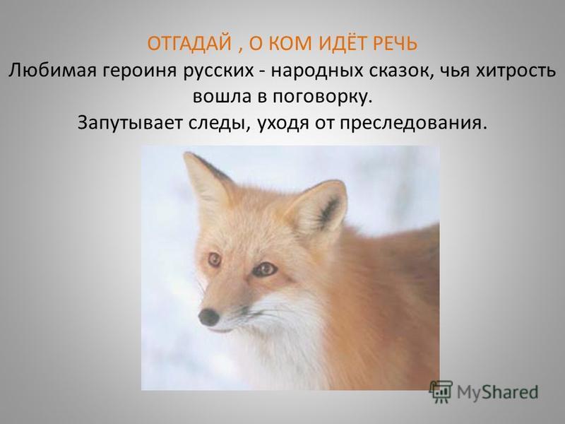 ОТГАДАЙ, О КОМ ИДЁТ РЕЧЬ Любимая героиня русских - народных сказок, чья хитрость вошла в поговорку. Запутывает следы, уходя от преследования.