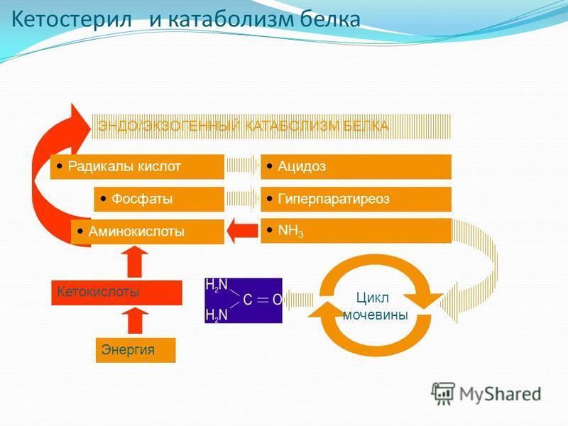 Keтостерил и катаболизм белка ЭНДО/ЭКЗОГЕННЫЙ КАТАБОЛИЗМ БЕЛКА Гиперпаратиреоз Ацидоз NH 3 Кетокислоты Цикл мочевины Радикалы кислот Фосфаты Аминокислоты Энергия