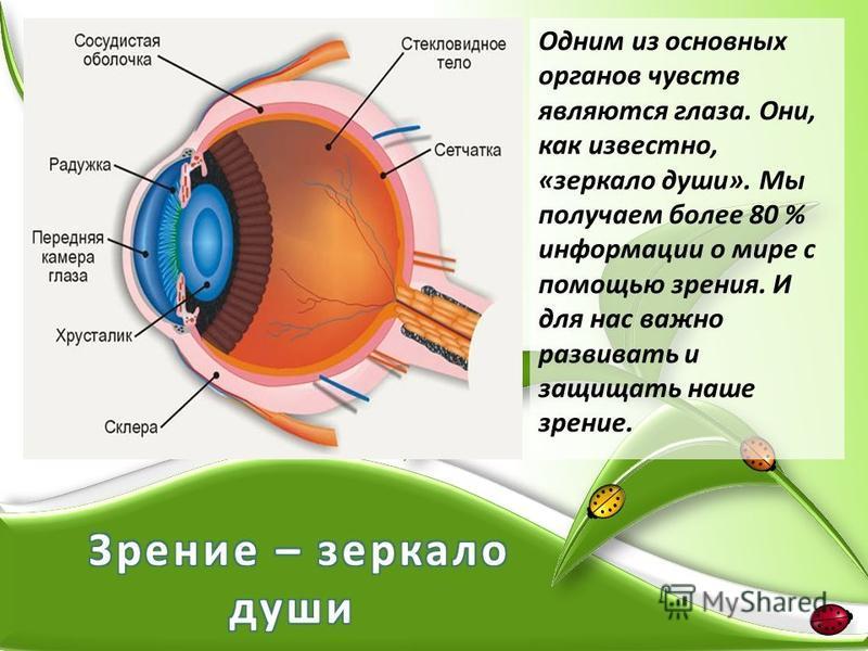 Одним из основных органов чувств являются глаза. Они, как известно, «зеркало души». Мы получаем более 80 % информации о мире с помощью зрения. И для нас важно развивать и защищать наше зрение.