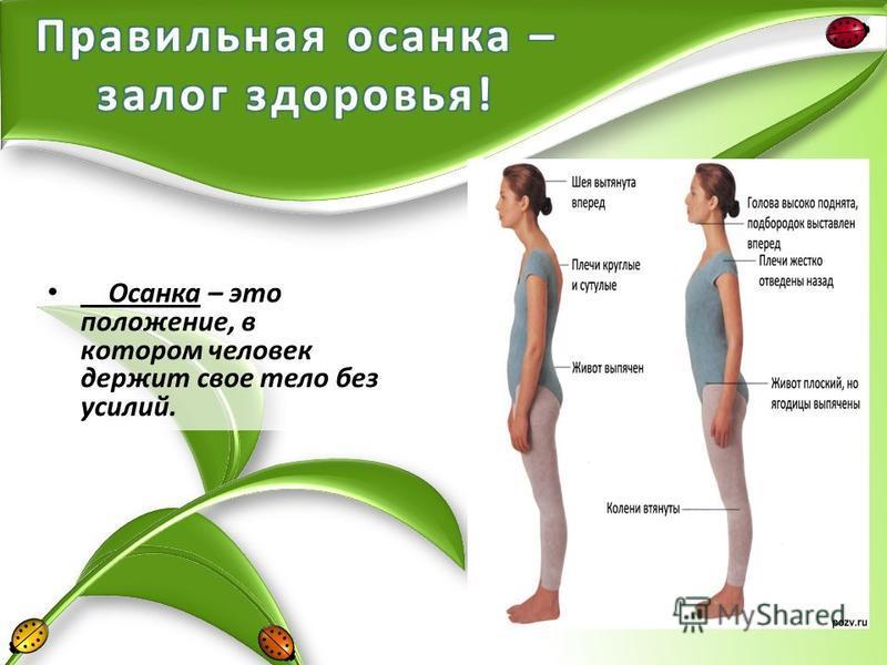 Осанка – это положение, в котором человек держит свое тело без усилий.