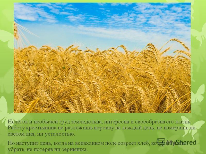 Нелёгок и необычен труд земледельца, интересна и своеобразна его жизнь. Работу крестьянина не разложишь поровну на каждый день, не измеришь ни светом дня, ни усталостью. Но наступит день, когда на вспаханном поле созреет хлеб, который надо убрать, не