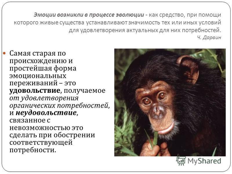 Эмоции возникли в процессе эволюции - как средство, при помощи которого живые существа устанавливают значимость тех или иных условий для удовлетворения актуальных для них потребностей. Ч. Дарвин Самая старая по происхождению и простейшая форма эмоцио