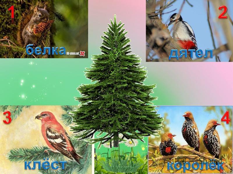 Игра «Не ошибись!» Кого питает лесная ель? Назови птиц. Кто здесь лишний? Почему?