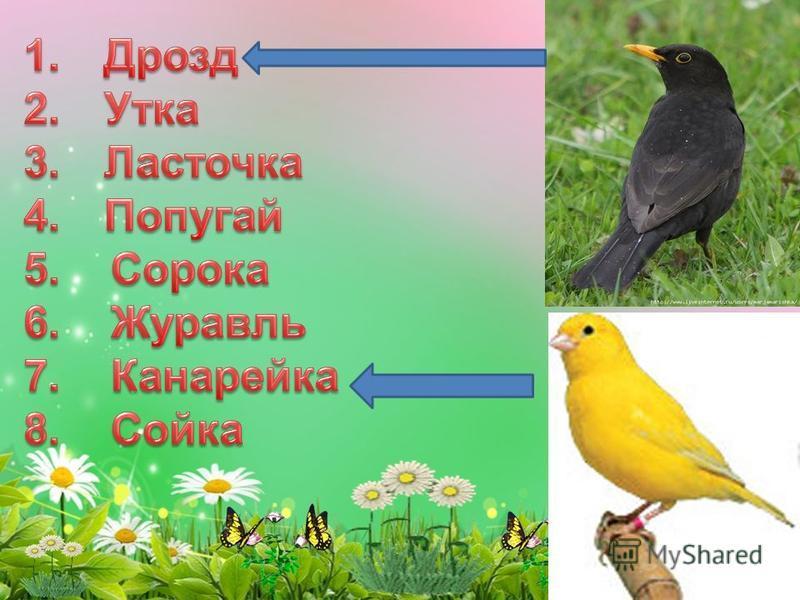 Игра «Кто есть кто» Соотнеси название птицы с картинкой с картинкой