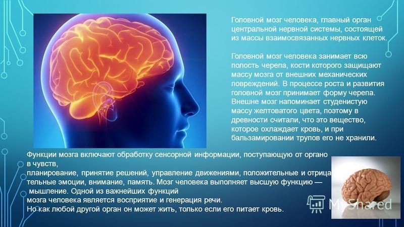 Головной мозг человека, главный орган центральной нервной системы, состоящей из массы взаимосвязанных нервных клеток. Головной мозг человека занимает всю полость черепа, кости которого защищают массу мозга от внешних механических повреждений. B проце