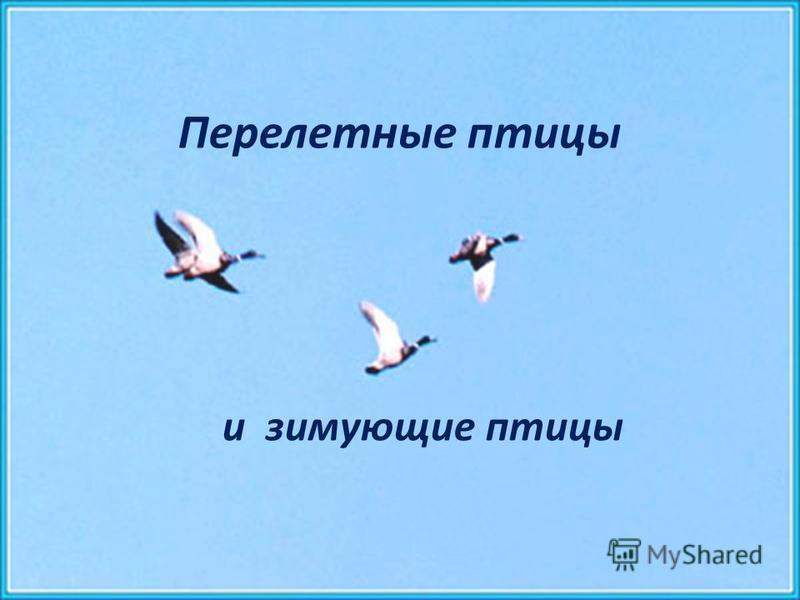 Перелетные птицы и зимующие птицы