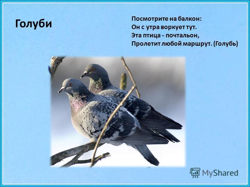 Голуби Посмотрите на балкон: Он с утра воркует тут. Эта птица - почтальон, Пролетит любой маршрут. (Голубь)