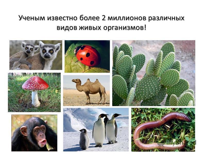 Ученым известно более 2 миллионов различных видов живых организмов!
