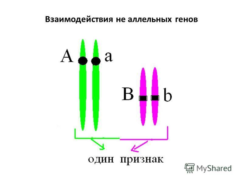 Взаимодействия не аллелиьных генов