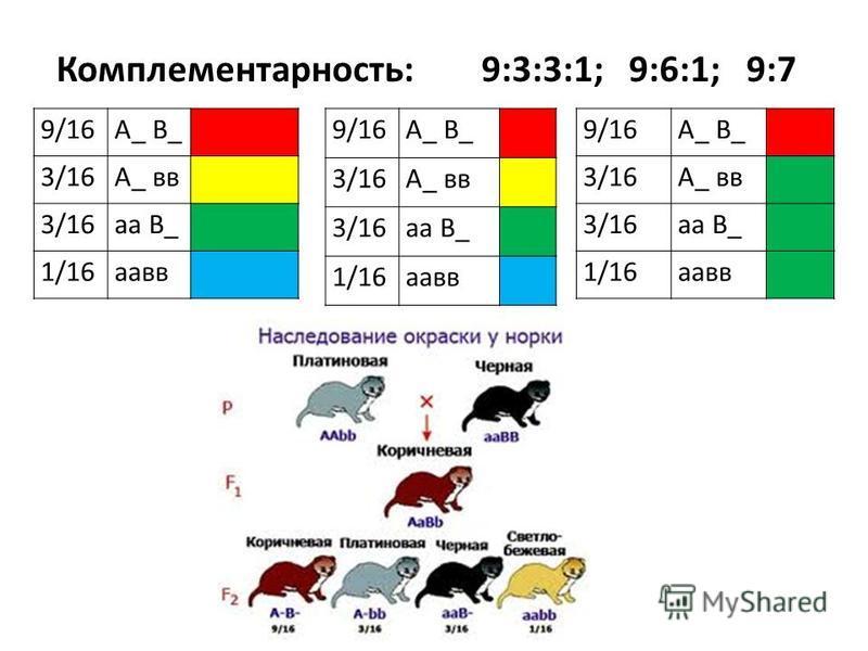 Комплементарность: 9:3:3:1; 9:6:1; 9:7 9/16А_ В_ 3/16А_ вв 3/16 а В_ 1/16 авв 9/16А_ В_ 3/16А_ вв 3/16 а В_ 1/16 авв 9/16А_ В_ 3/16А_ вв 3/16 а В_ 1/16 авв