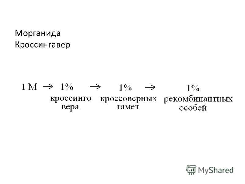 Морганида Кроссингавер