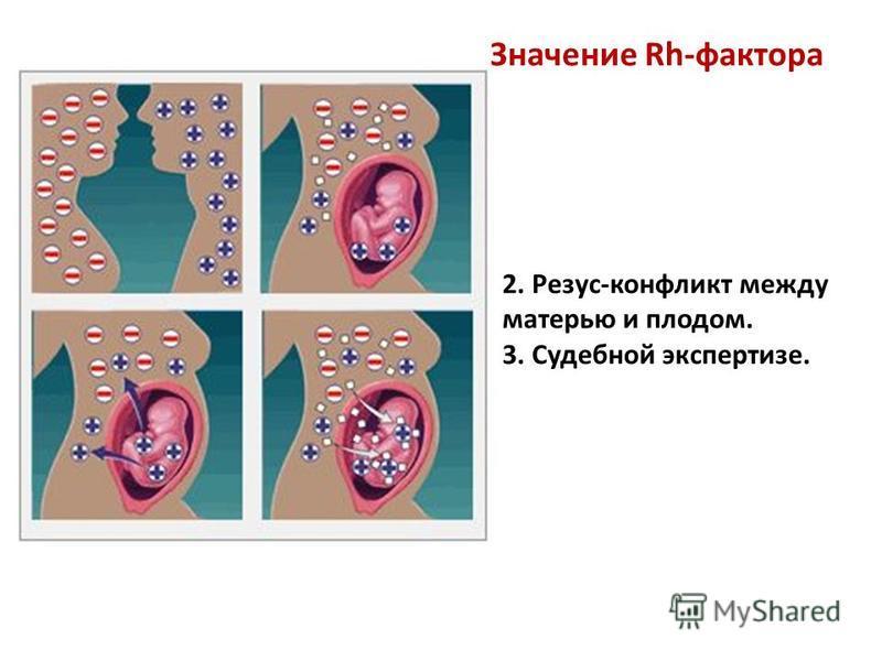Значение Rh-фактора 2. Резус-конфликт между матерью и плодом. 3. Судебной экспертизе.