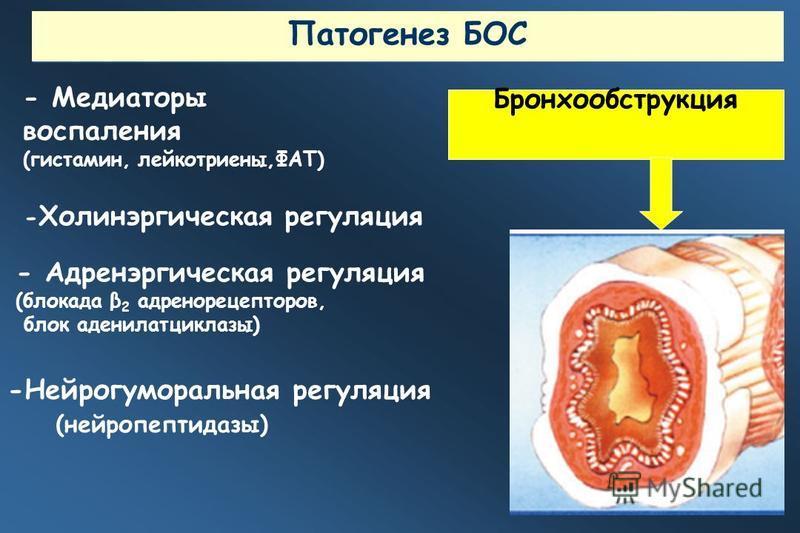 - Медиаторы воспаления (гистамин, лейкотриены,ФАТ) -Нейрогуморальная регуляция (нейропептидазы) - Адренэргическая регуляция (блокада β 2 адренорецепторов, блок аденилатциклазы) Бронхообструкция - Холинэргическая регуляция Патогенез БОС