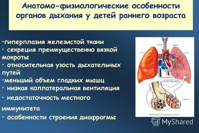 Анатомо-физиологические особенности органов дыхания у детей раннего возраста гиперплазия железистой ткани секреция преимущественно вязкой мокроты относительная узость дыхательных путей меньший объем гладких мышц низкая коллатеральная вентиляция недос
