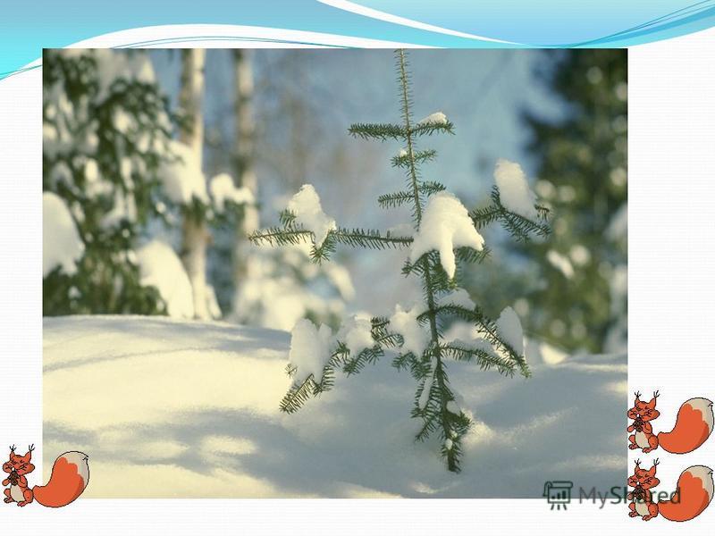 Утром в лес пришла в гости зима. Маленькие ёлочки купались в пушистом снегу. Виднелись только макушки. По небу важно плыла большая туча. Вот опять повалил снег. Утром в лес пришла в гости зима маленькие ёлочки купались в пушистом снегу виднелись толь