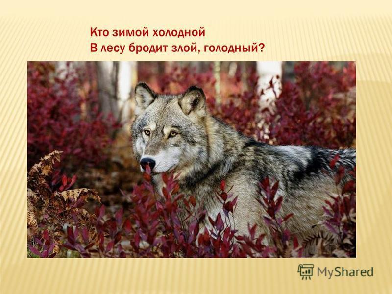 Кто зимой холодной В лесу бродит злой, голодный?