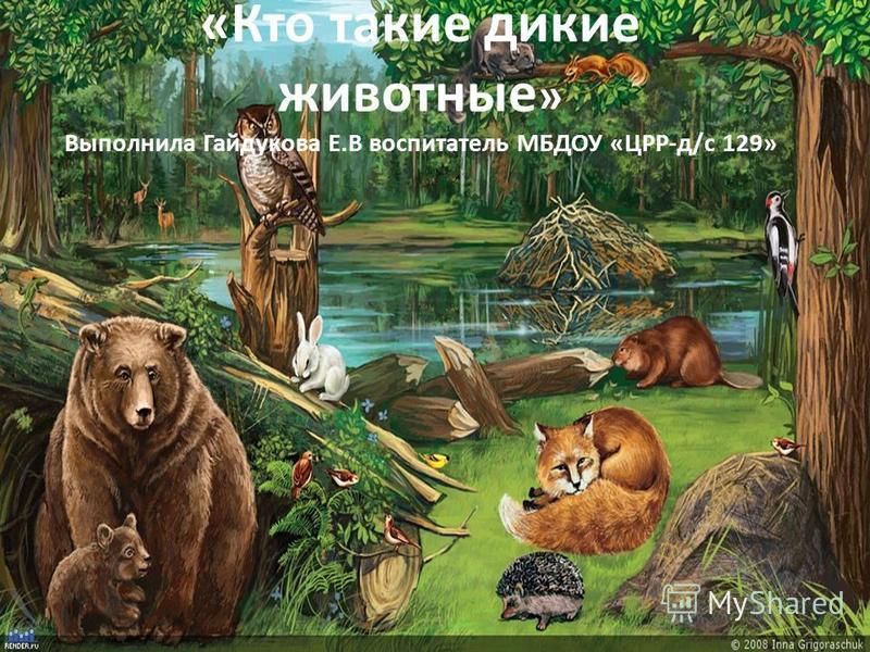 «Кто такие дикие животные » Выполнила Гайдукова Е.В воспитатель МБДОУ «ЦРР-д/с 129»