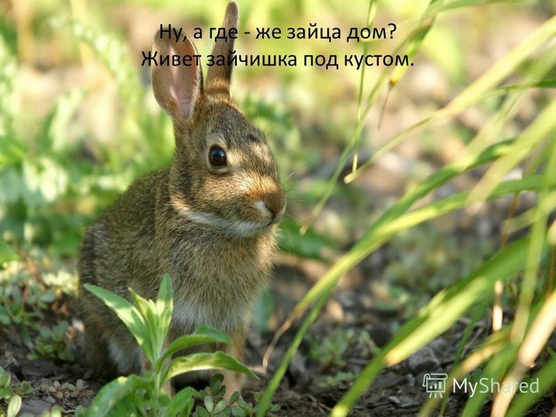 Ну, а где - же зайца дом? Живет зайчишка под кустом.