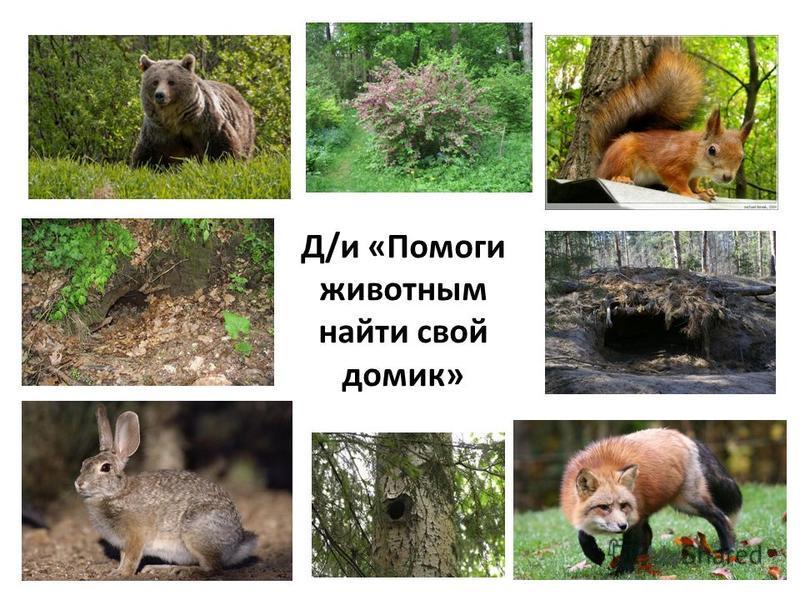 Д/и «Помоги животным найти свой домик»