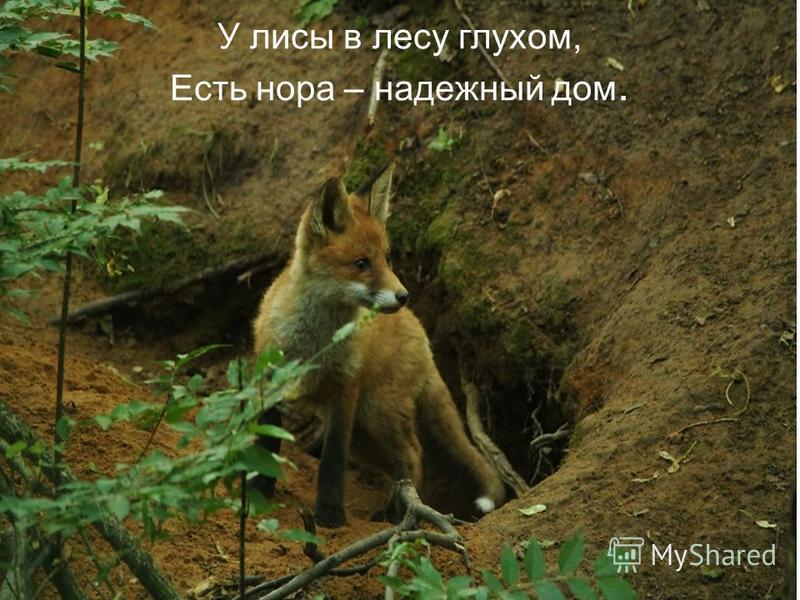 У лисы в лесу глухом, Есть нора – надежный дом.