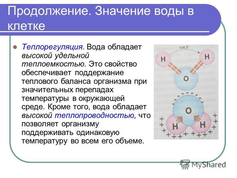 Продолжение. Значение воды в клетке Теплорегуляция. Вода обладает высокой удельной теплоемкостью. Это свойство обеспечивает поддержание теплового баланса организма при значительных перепадах температуры в окружающей среде. Кроме того, вода обладает в