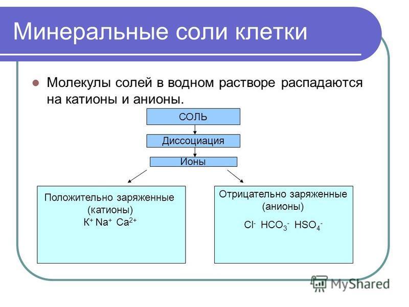Минеральные соли клетки Молекулы солей в водном растворе распадаются на катионы и анионы. СОЛЬ Диссоциация Ионы Положительно заряженные (катионы) К + Na + Ca 2+ Сl - HCO 3 - HSO 4 - Отрицательно заряженные (анионы)