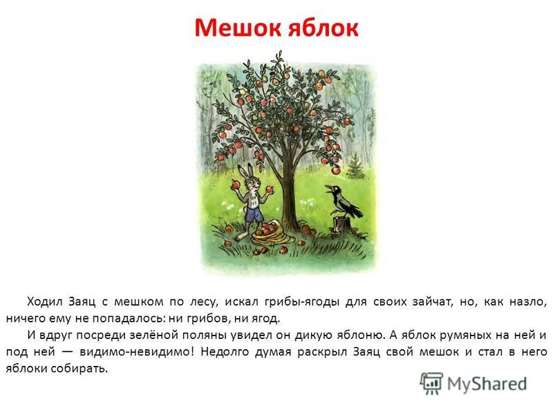 Мешок яблок Ходил Заяц с мешком по лесу, искал грибы-ягоды для своих зайчат, но, как назло, ничего ему не попадалось: ни грибов, ни ягод. И вдруг посреди зелёной поляны увидел он дикую яблоню. А яблок румяных на ней и под ней видимо-невидимо! Недолго