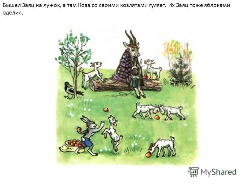 Вышел Заяц на лужок, а там Коза со своими козлятами гуляет. Их Заяц тоже яблоками оделил.