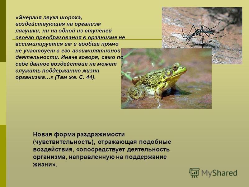 «Энергия звука шороха, воздействующая на организм лягушки, ни на одной из ступеней своего преобразования в организме не ассимилируется им и вообще прямо не участвует в его ассимилятивной деятельности. Иначе говоря, само по себе данное воздействие не