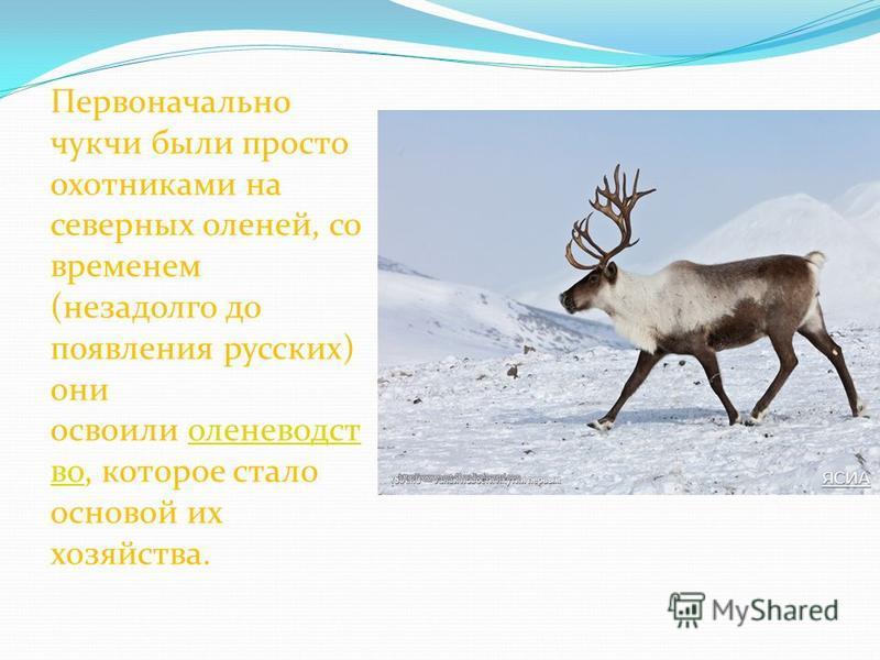 Первоначально чукчи были просто охотниками на северных оленей, со временем (незадолго до появления русских) они освоили оленеводство, которое стало основой их хозяйства.оленеводство