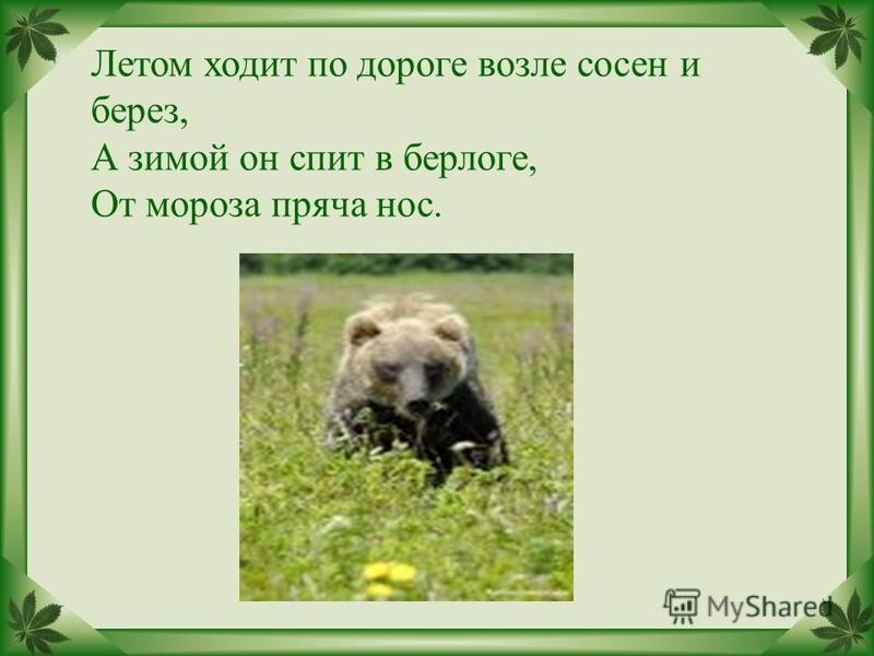 . Летом ходит по дороге возле сосен и берез, А зимой он спит в берлоге, От мороза пряча нос.