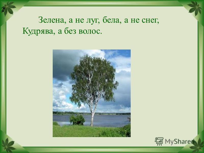 : Зелена, а не луг, бела, а не снег, Кудрява, а без волос.