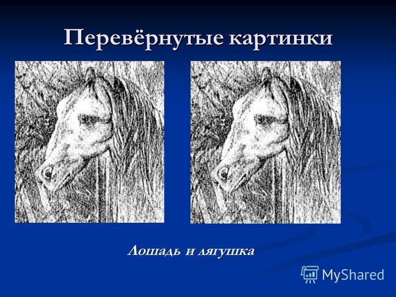 Перевёрнутые картинки Лошадь и лягушка